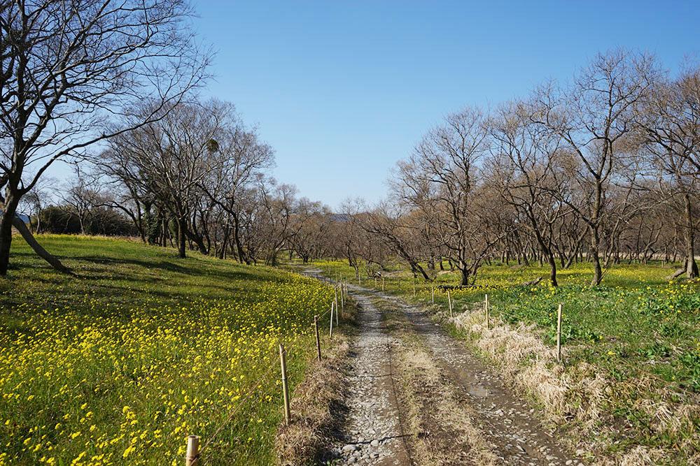 入田のヤナギ林 遊歩道