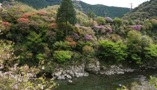 【玖木のつつじ】神秘的なほど美しい!! 新緑とつつじが織りなす色鮮やかな光景