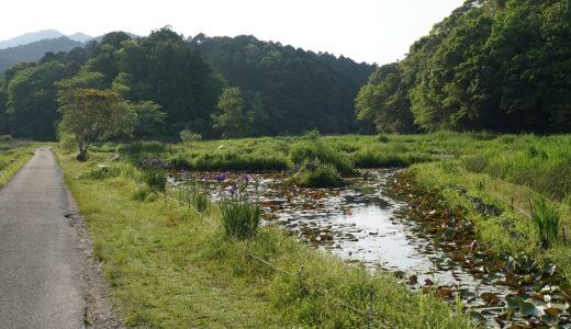 【トンボ自然公園】昔は当たり前の景色、でも今では貴重な大自然。に触れてみよう。